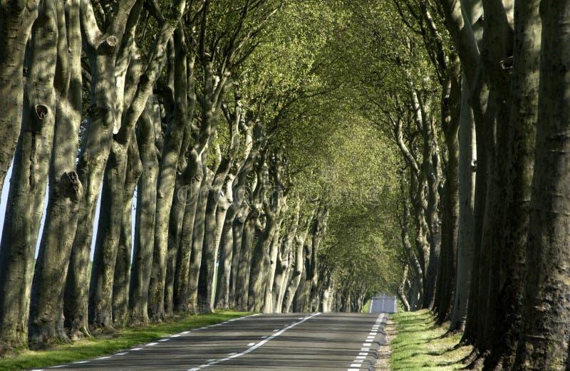 Straße im Land stockfoto