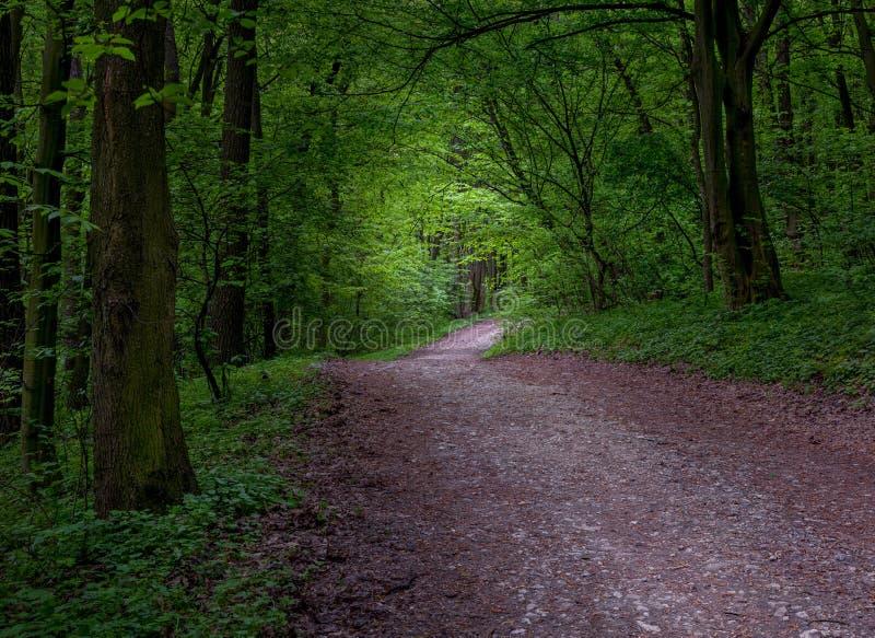 Straße im mystischen dunklen Wald lizenzfreie stockbilder