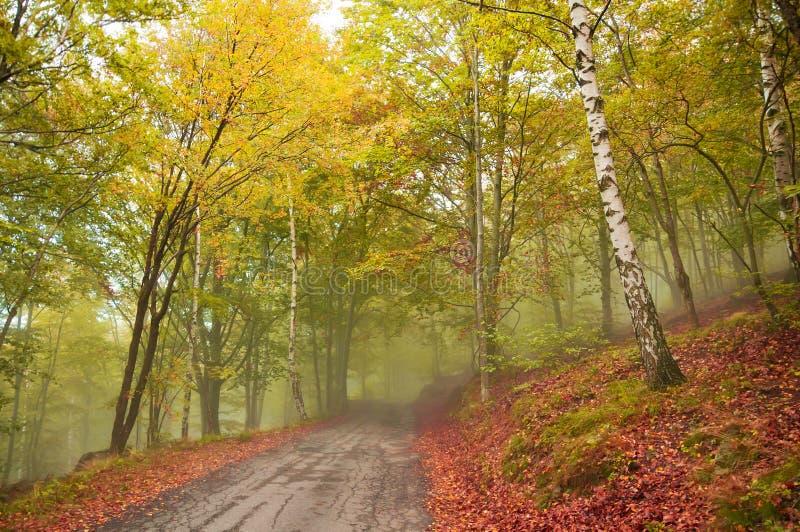 Straße im nebeligen Wald im Herbst lizenzfreie stockfotografie