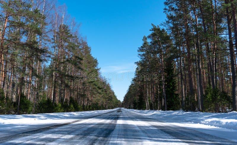 Straße im Niederlassungswald mit Baum mit grünen Nadeln lizenzfreie stockfotografie