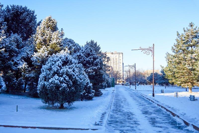 Straße im Park belichtet durch die Sonne unter dem Schnee stockfotografie