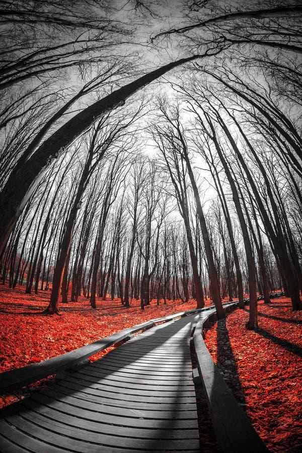 Straße im roten Wald lizenzfreies stockfoto