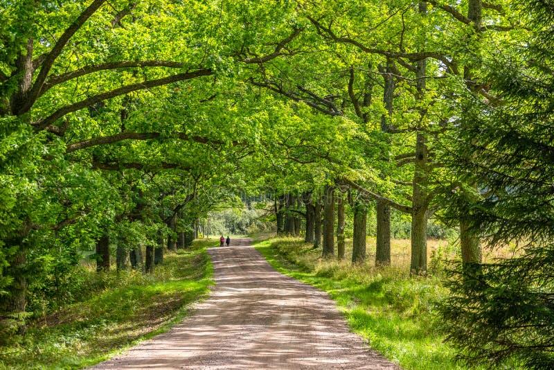 Straße im Sommerwald stockfotografie