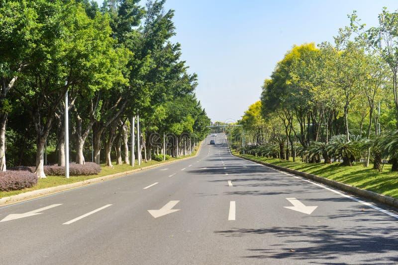 Straße im Stadtwald lizenzfreie stockbilder