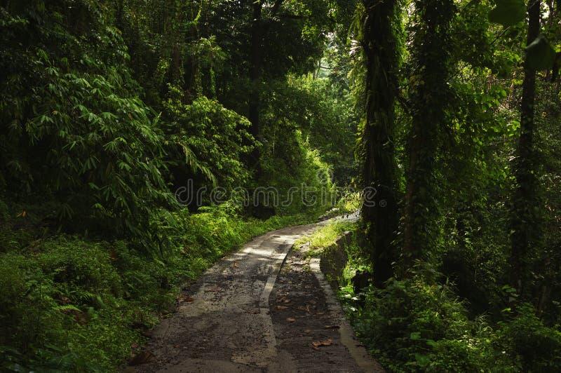 Straße im tropischen Wald stockbilder