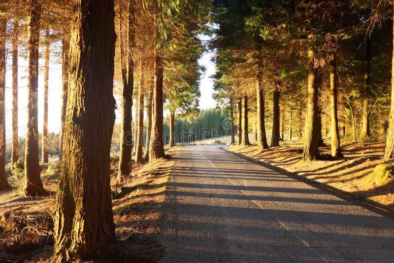 Straße im Wald stockfotos
