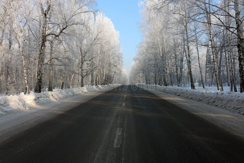 Straße im Wald lizenzfreies stockbild