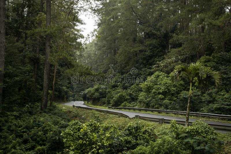 Straße im Wald, einsamer ruhiger Vibe stockbild