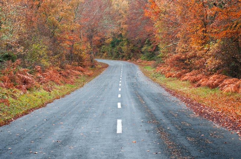 Straße im Wald im Herbst, Fallfarben stockbilder