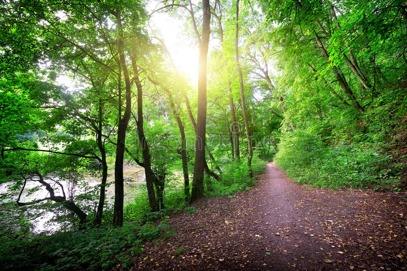 Straße im Wald nahe dem Fluss stockbild