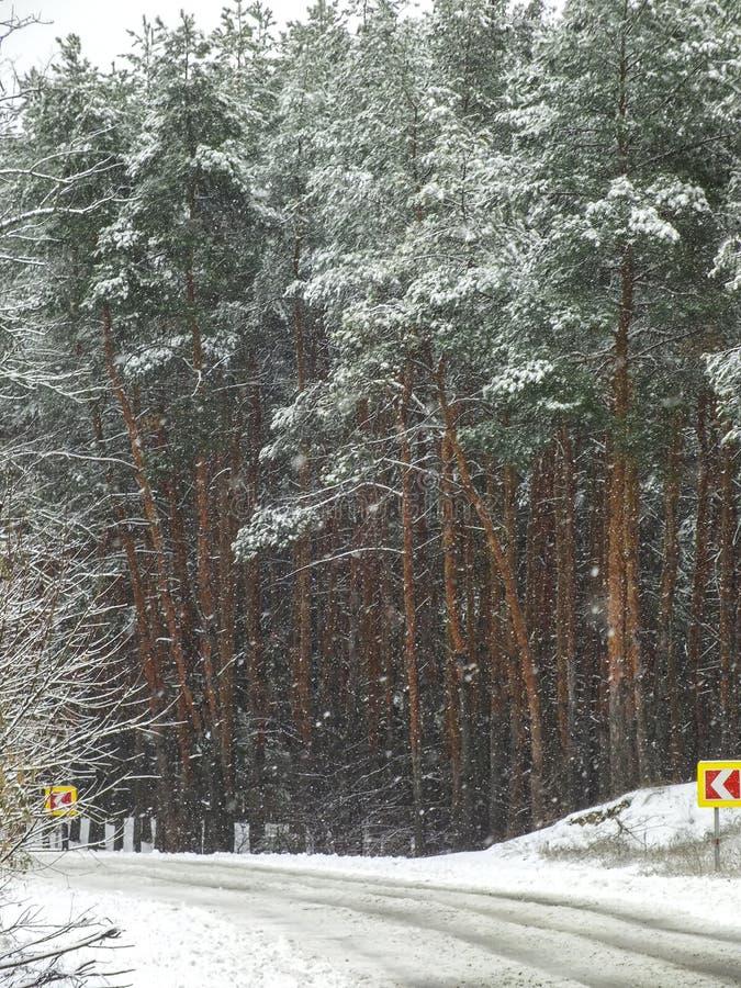 Straße im Wald unter Schneefällen stockbilder