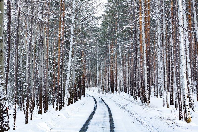 Straße im Winterwald lizenzfreies stockfoto