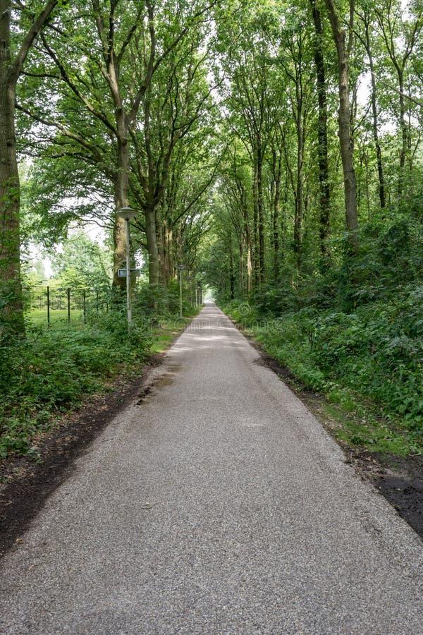 Straße mit Bäumen stockfotos