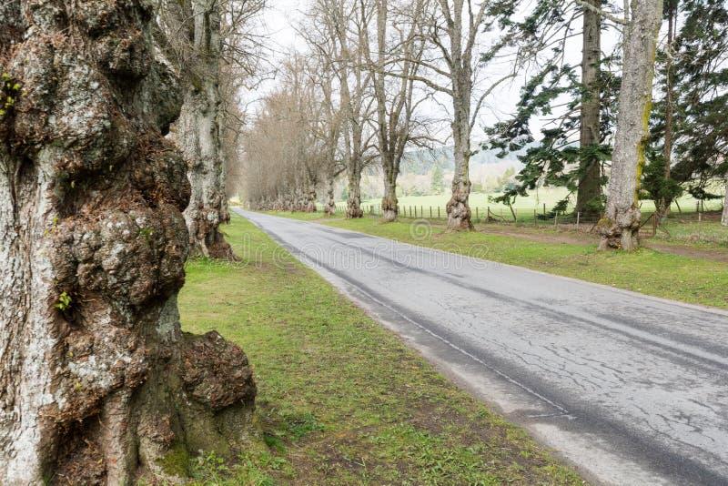 Straße mit Bäumen in Schottland, Großbritannien stockfotografie