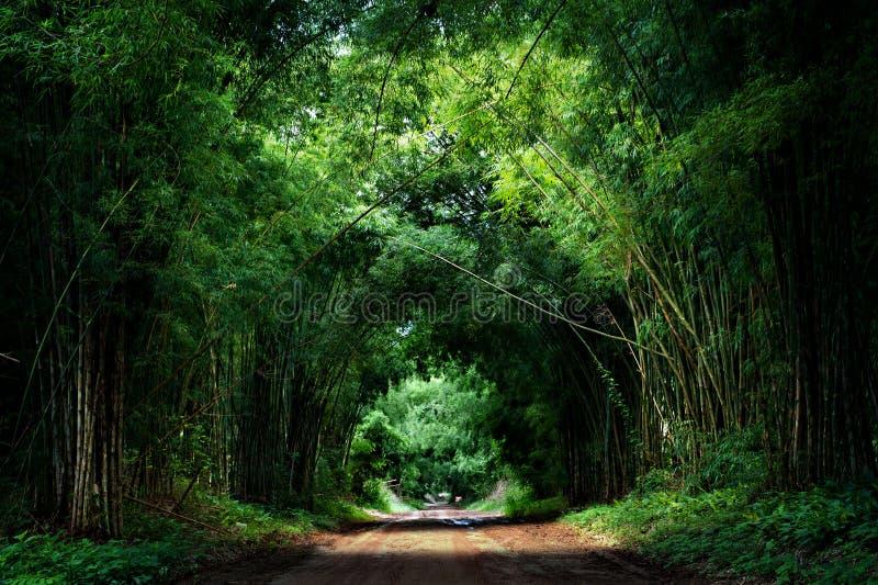 Straße mit Bambus lizenzfreie stockfotos