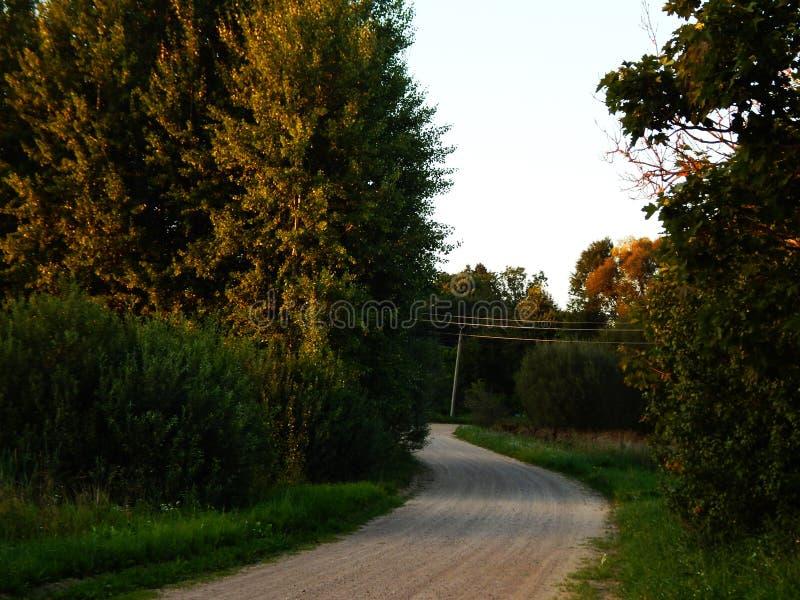 Straße mit Blumen zwischen Bäumen lizenzfreies stockfoto