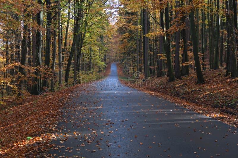Straße mit colorfull Blättern im Herbst forrest lizenzfreie stockfotos