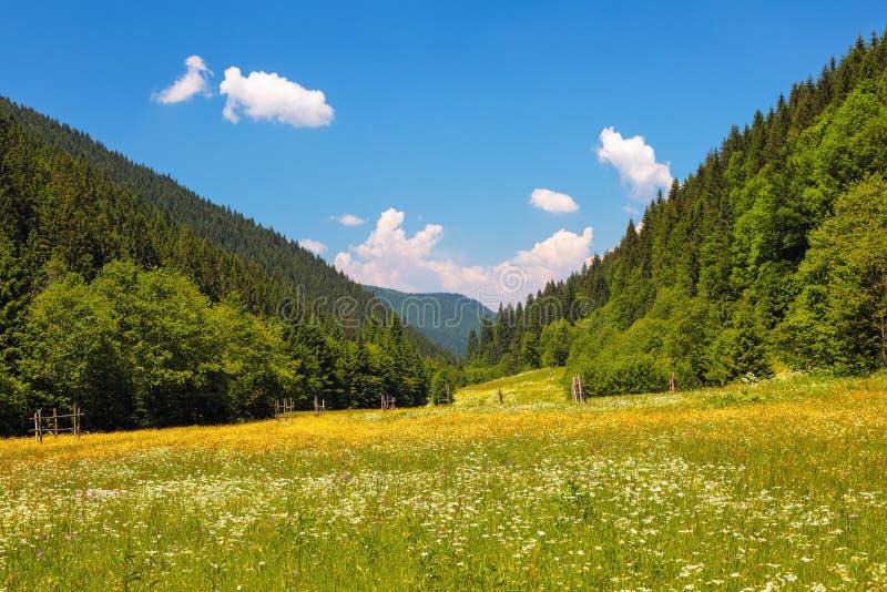 Straße mit einem Bretterzaun auf einem Gebiet mit gelben Blumen Die schöne Aussicht zur Landschaft des Hochgebirges am sonnigen T lizenzfreie stockbilder
