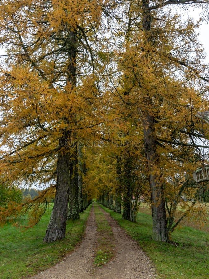 Straße mit schönen bunten Bäumen lizenzfreie stockfotografie