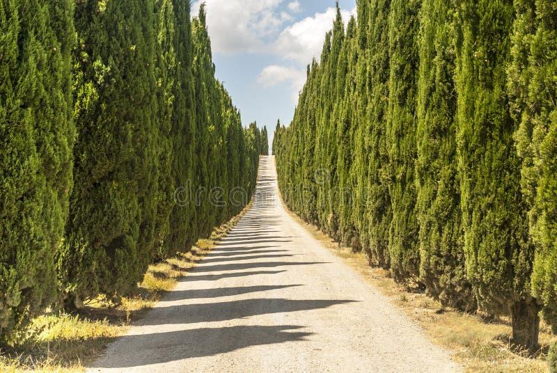 Straße mit Zypressen in Toskana lizenzfreies stockbild