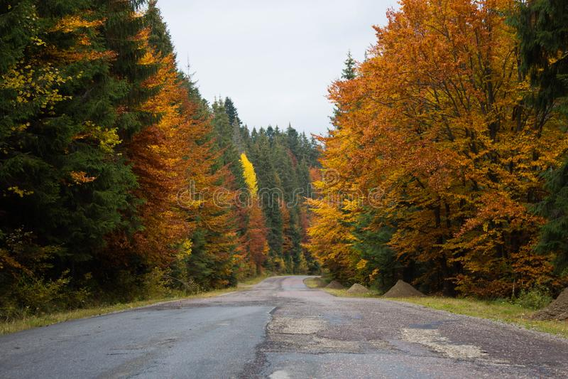 Straße mitten in buntem Herbstwald lizenzfreie stockfotografie
