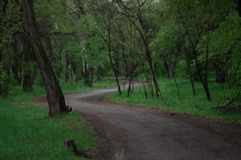 Straße mitten in dem Wald im regnerischen Wetter lizenzfreies stockbild