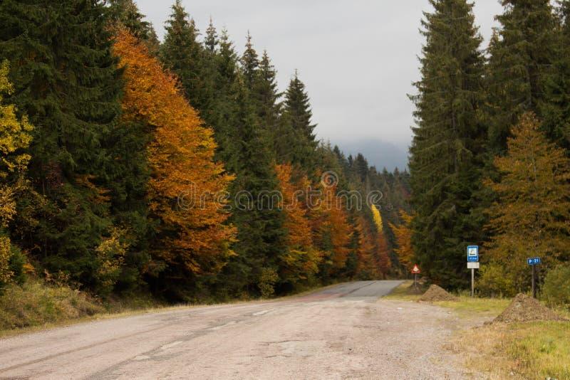 Straße mitten in Herbstwald lizenzfreies stockfoto