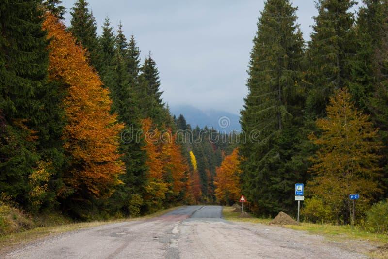 Straße mitten in Herbstwald stockfotografie