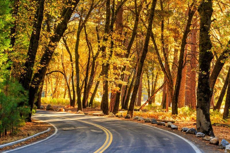 Straße in Nationalpark lizenzfreies stockbild