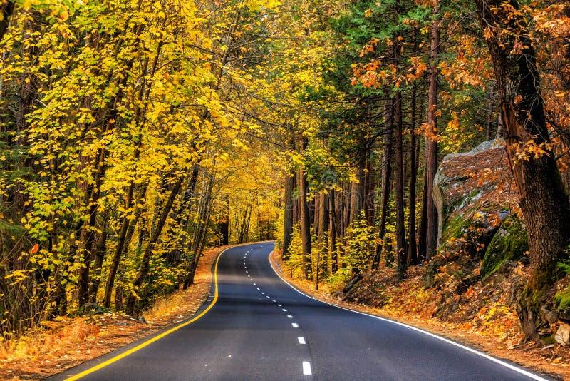Straße in Nationalpark stockbild