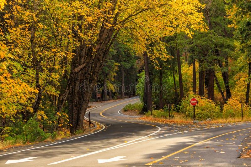 Straße in Nationalpark stockfoto