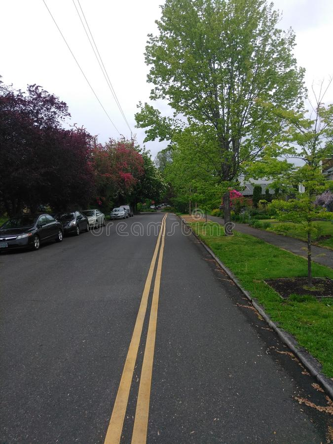 Straße in Portland, Bäume, Natur, Gras, Bürgersteig, Straße stockfotografie