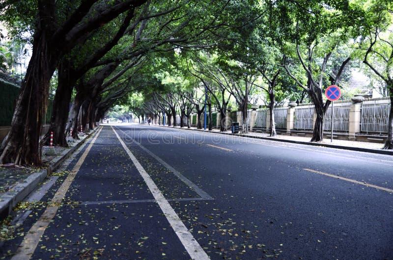 Straße und Bäume lizenzfreie stockfotos