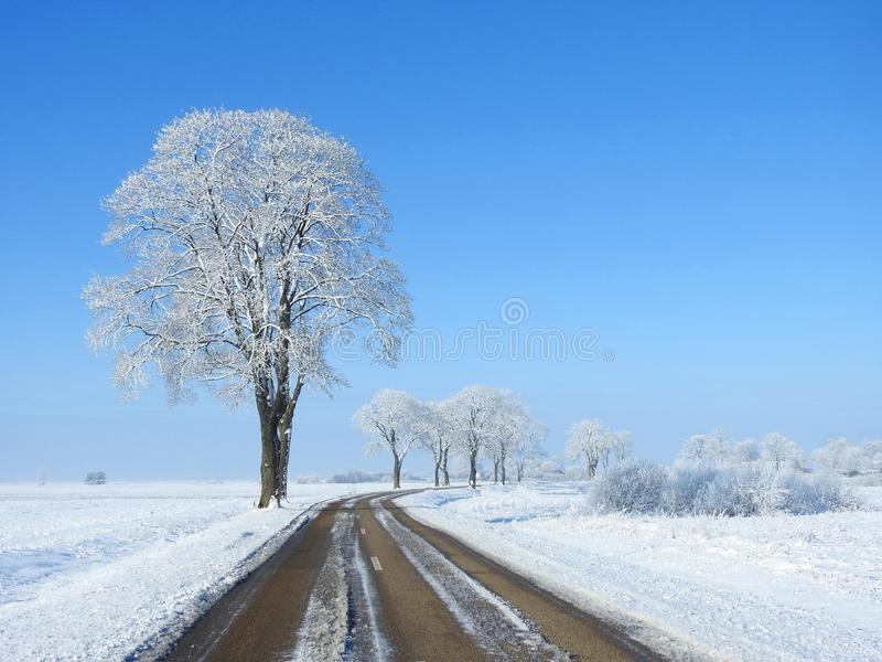 Straße und schöne alte schneebedeckte Bäume, Litauen lizenzfreie stockfotos