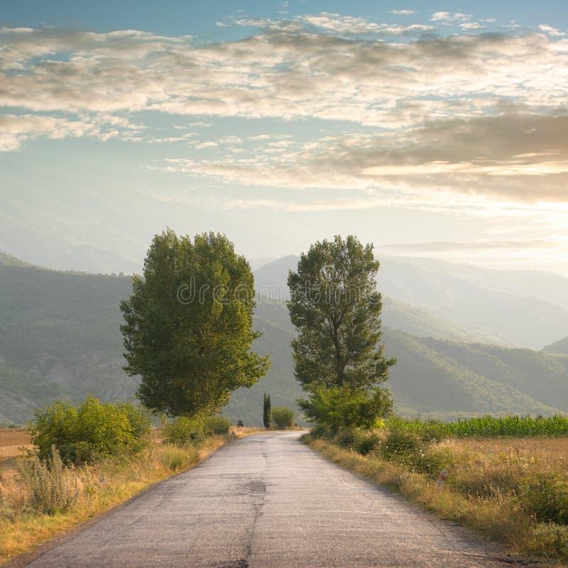Straße und zwei Bäume stockfoto