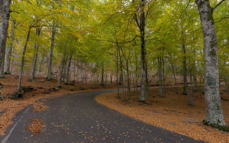 Straße unter dem Herbstbuchenwald während des Falles stockfotos