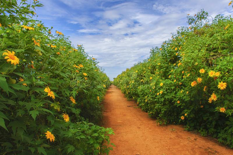 Straße von Chrysanthemen lizenzfreies stockfoto