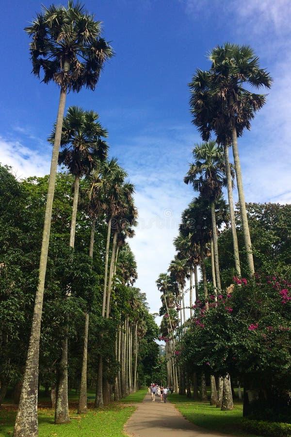 Straße von Palmen stockfotografie