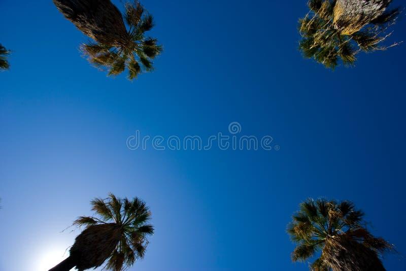 Straße zeichnete in den Palmen stockbilder