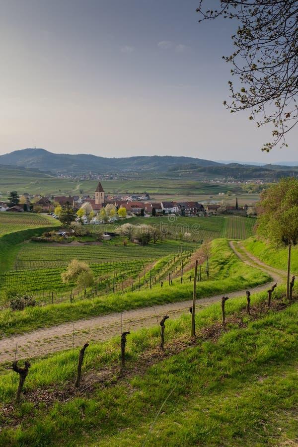 Straße zu Burkheim sind Kaiserstuhl an einem Vorfrühlingsmorgen lizenzfreies stockfoto