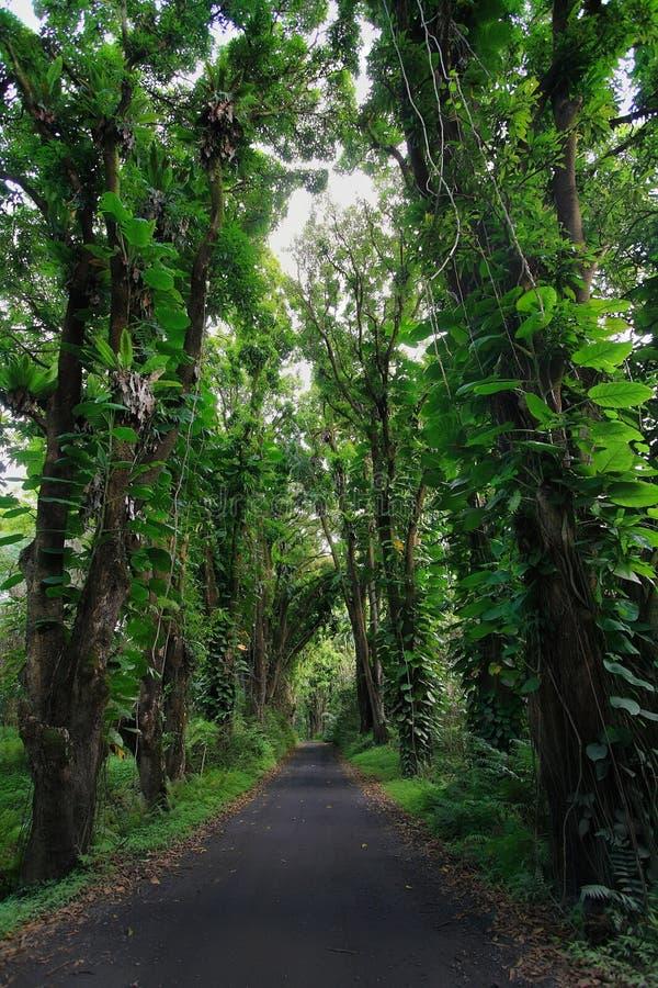 Straße zu Kalapana-Strand lizenzfreie stockfotos
