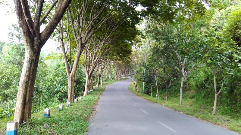 Straße zu Wonorejo-Reservoir Tulungagung stockbild