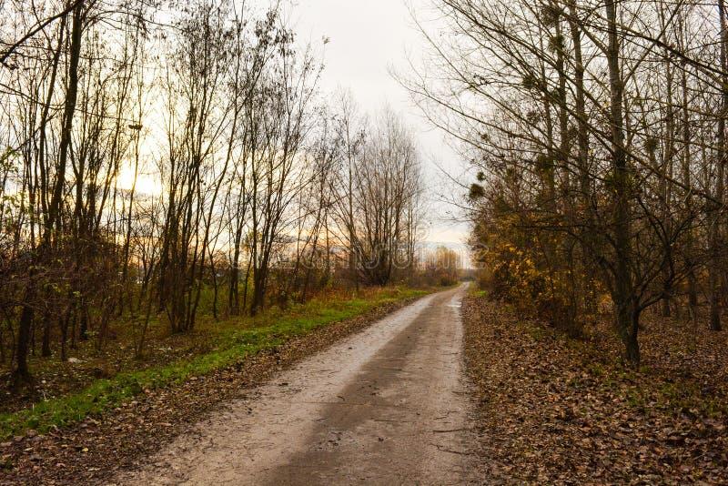 Straße zum Fluss im Herbst lizenzfreie stockfotos