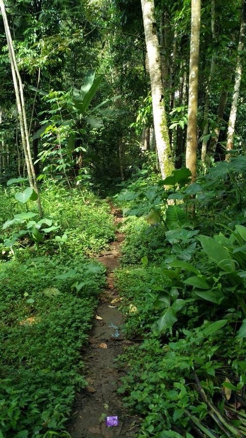 Straße zum regnerischen Wald lizenzfreie stockbilder