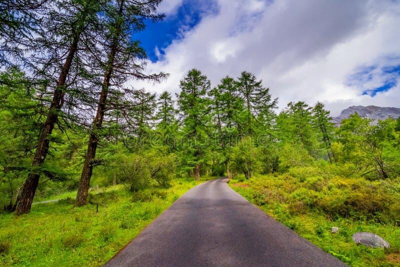 Straße zum Schneeberg mit Kiefernwald lizenzfreie stockfotos