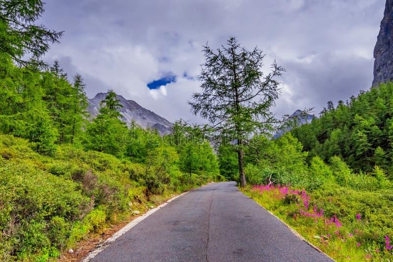 Straße zum Schneeberg mit Kiefernwald stockbilder