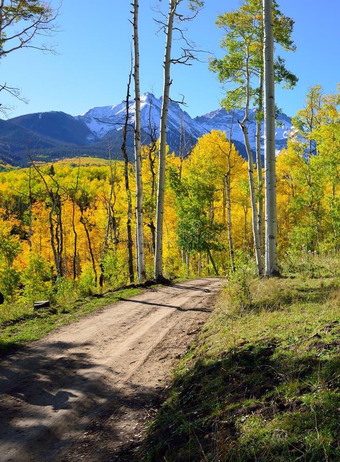Straße zwar der Wald von gelben Espen lizenzfreies stockfoto