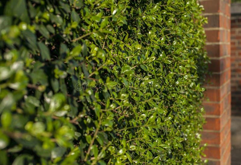 Straßen von London - grüne Büsche entlang den Straßen lizenzfreies stockfoto