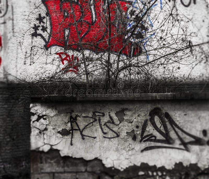 Straßenansicht der Kunst - sterbendes Errichten lizenzfreie stockfotos