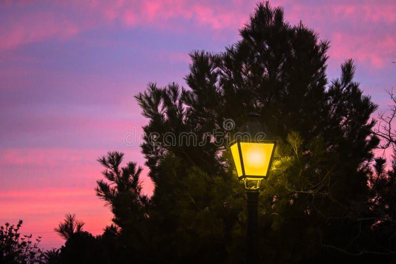 Straßenbeleuchtung, die unter einem Baum glänzt stockbild